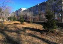 Активисты движения «Зелёный город», сотрудники Байкальской горной компании, студенты и общественники высадили шесть двухметровых елей и полтора десятка сибирских рябин в парке Дворца пионеров в Чите
