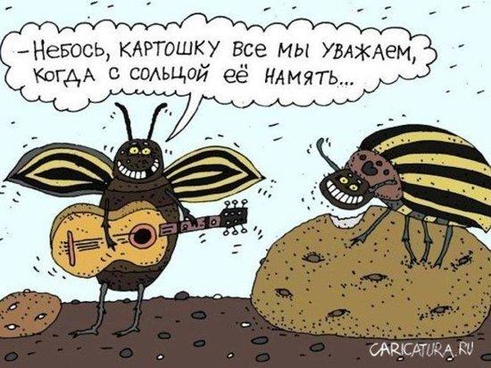 В Хакасии посчитали зимующую саранчу