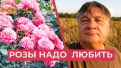 Знаменитый садовод показал видео правильной подготовки роз к зиме
