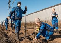 Сотрудники одного из крупнейших угледобывающих предприятий «Разрез Восточный» завершили осеннюю посадку деревьев