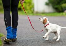 Если у вас дома появился щенок — значит, рано или поздно настанет пора выводить его на улицу