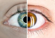 Ученые нашли связь между цветом глаз и склонностью к алкоголизму