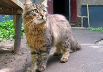 Группа живодеров, которые зверски убивают бездомных кошек, объявилась в подмосковной Лобне