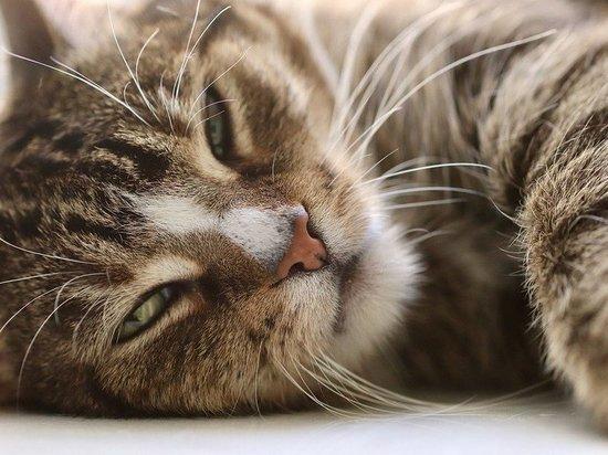 В Воронеже упавшую в колодец кошку освободили с помощью колбасы
