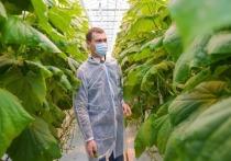Михаилу Дегтярёву понравились японские овощи, выращенные в Хабаровске