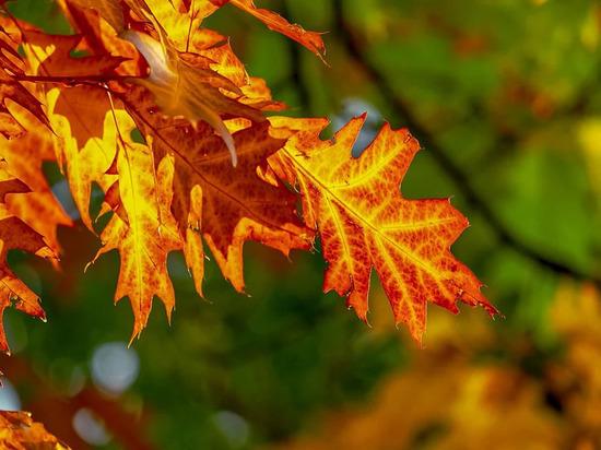 День Филиппа: что категорически нельзя делать 24 октября