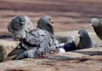 Митингующие принесли мешок семечек для хабаровских голубей