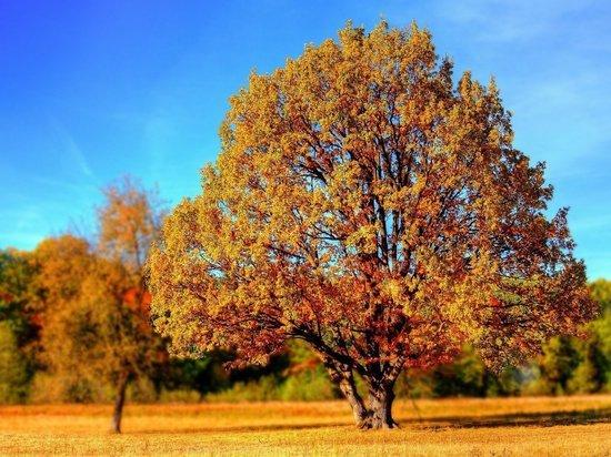 Синоптики анонсировали аномальное тепло в конце октября в России