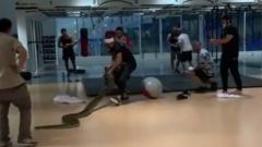 Нурмагомедова напугали питоном: видео с необычной тренировки