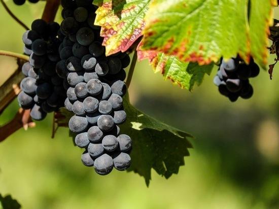 Ученые рассказали о пользе крымских фруктов при covid-19