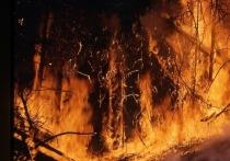 Методики расчета ущерба от лесных пожаров могут измениться