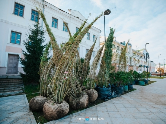 На Красной площади Чебоксар началась высадка деревьев