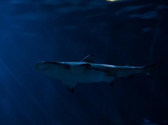 В Египте акула напала на украинских туристов: мальчик лишился руки