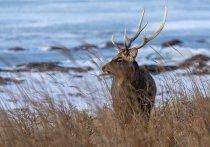 Вездеход с бригадой оленеводов перевернулся в Хабаровском крае