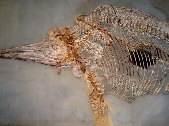 Во Владивостоке нашли останки ихтиозавра