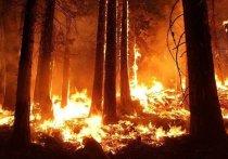 Площадь пожаров в Забайкальском крае сократилась на 60% в 2020 году из-за повышения федерального финансирования на борьбу с огнем
