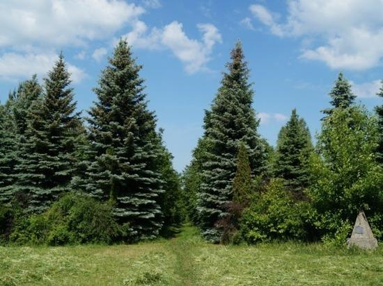 Памятник природы в Сергаче получит название