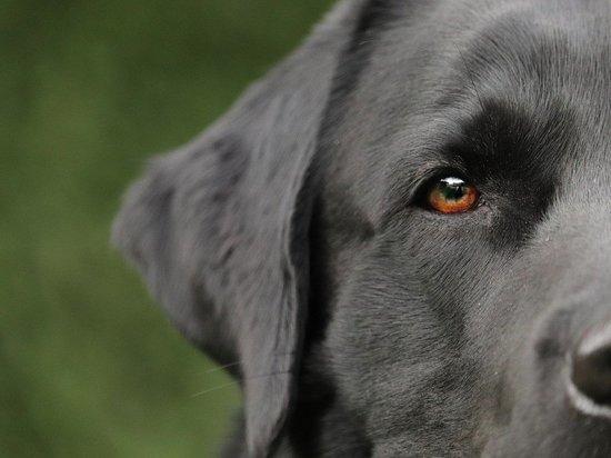 Агрессивная собака напала на людей в столице Кузбасса
