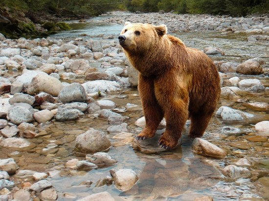 Медведь попытался затащить в клетку работника приюта в Курской области