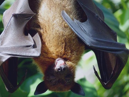 Ученые выясняют, что именно переносят животные