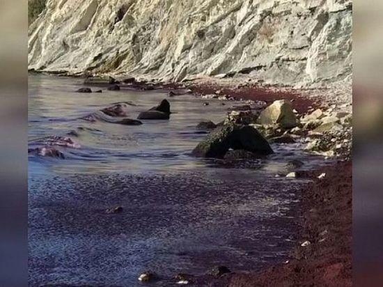 Названа причина, почему Черное море около Новороссийска стало красного цвета