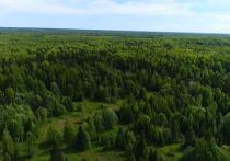 Заповедник «Кологривский лес» в Костромской области получил международный статус