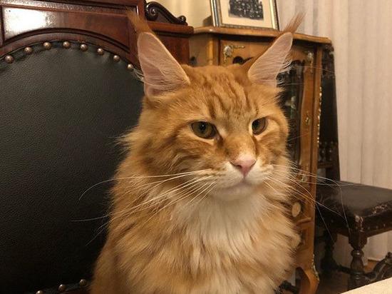 """Кошки - один из лучших антидепрессантов. """"МК в Пскове"""" изучил аккаунты известных в регионе и за его пределами персон и выбрал несколько подтверждающих тезис снимков и видео."""
