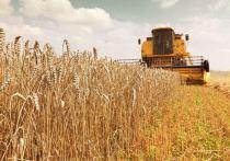 Сергей Ситников поручил увеличить посевы зерновых культур в два раза