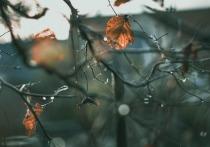 Синоптики прогнозируют теплый ноябрь в Алтайском крае