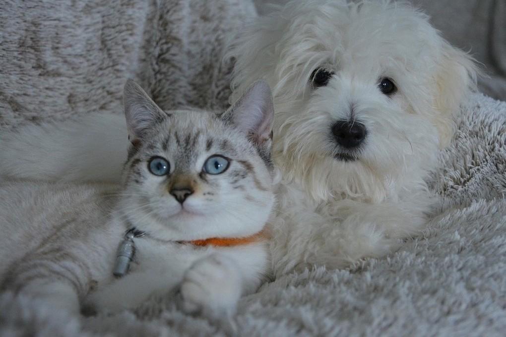 Российских студентов не учат лечить кошек и собак ...