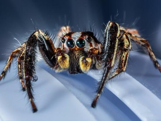 В Великобритании нашли пауков, которые растворяют внутренности жертв