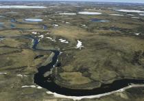 Статью о влиянии пожаров на почвы Ямала опубликовали в американском издании