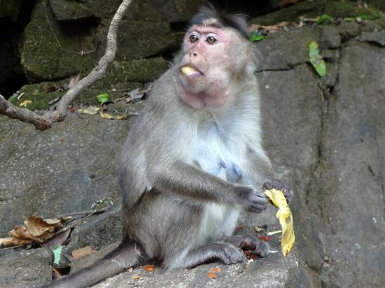 В посёлке Вербилки обезьяна напала на шестилетнюю девочку