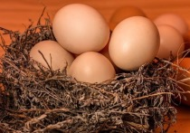 18 тысяч яиц индейки пропустили через границу в Псковской области