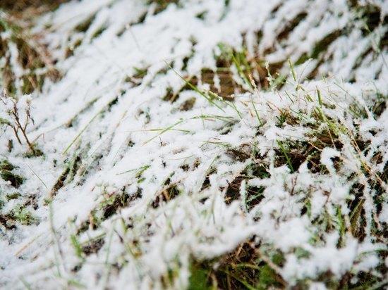 Первый снег придет в Волгоградскую область на следующей неделе
