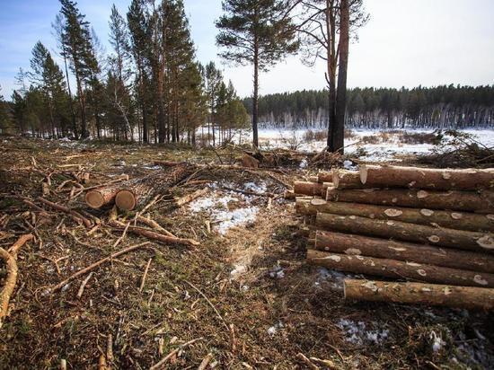 Чёрный лесоруб из Фалёнок нанёс природе ущерб на 1 млн рублей