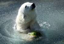 В зоопарке раскрыли причину смерти легендарной медведицы Мурмы