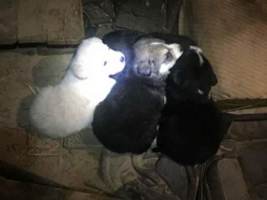 Жители Ноябрьска выбросили на промзону щенков в коробке