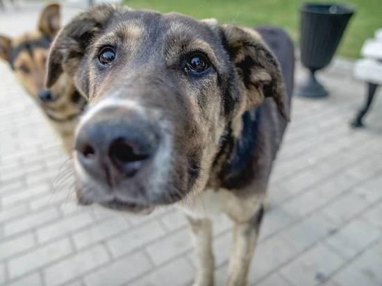 """""""Моя мама боится дойти до магазина, до работы, потому что стаи везде"""": в Астрахани собаки нападают на людей"""