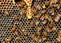 Мёд – самое полезное и, пожалуй, самое древнее лакомство