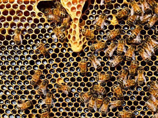 Пчёлы с характером и самый правильный мёд – секреты псковского пчеловода