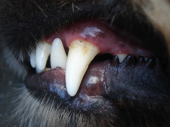На Ставрополье расследуют дело о собаке-убийце