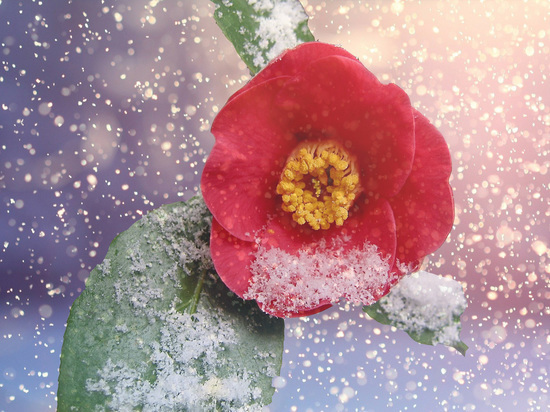 Для трёх знаков зодиака зима запустит период расцвета