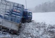 Сразу три легковых авто и грузовик столкнулись на участке дороги Барнаул – Заринск