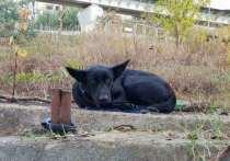 В Адлере женщина оставила собаку привязанной на улице и не вернулась