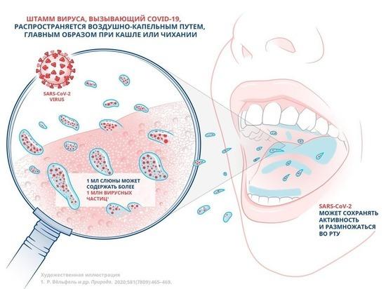 Исследование показало, что использование ополаскивателя для рта, содержащего CPC в определенной концентрации, подавляет активность штамма SARS-CoV-2 на 99,9%