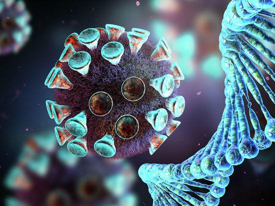 Причиной является опасность мутации COVID-19 у норок