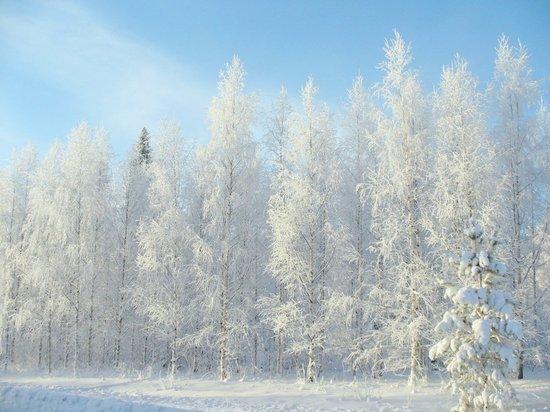 Предстоящая рабочая неделя в Кирове будет солнечной и в меру морозной