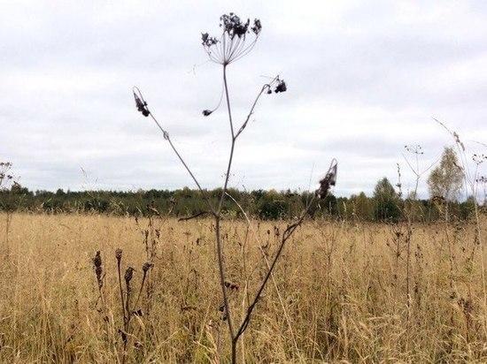 В Чувашии предприятия вместо сельхозкультур выращивали сорняки и кусты