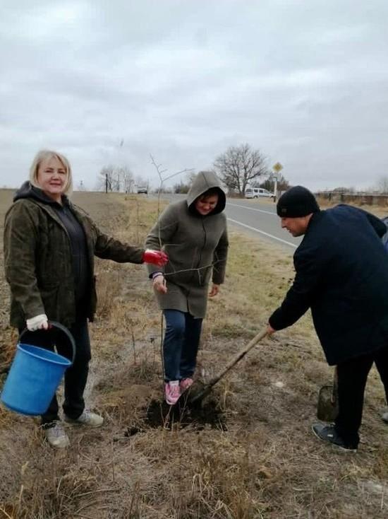 В Ставропольском крае «Сад памяти» становится все больше